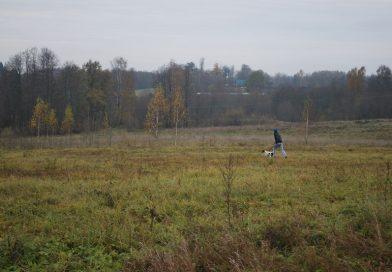 Naujenes pagasta pārvalde  piedāvā iznomāt neapbūvētās zemes vienības