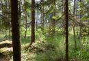 """Konkurss """"Sakoptākais mežs"""" – pieteikšanās līdz 29. jūnijam"""
